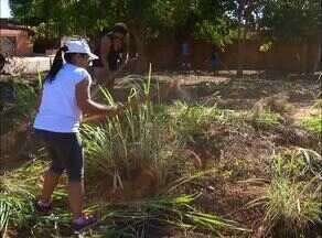 Mulheres fazem mutirão para limpar lote em Palmas - Mulheres fazem mutirão para limpar lote em Palmas