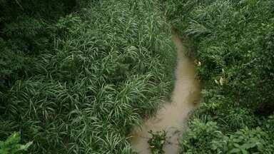 Expedição Água: matas ciliares - Conheça o projeto de preservação da bacia do rio Guandu.