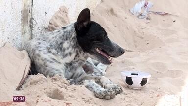 Cachorro abandonado no Piauí vive com ajuda de vizinhos - Família de Bidu se mudou e deixou o cãozinho no meio da rua. Desde então, o cachorro permanece na calçada como se esperasse o retorno dos donos