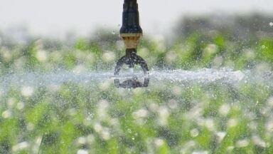 Água é agricultura também! - Um grupo de Ilha Solteira criou um aplicativo gratuito que ajuda agricultores de todo o Brasil a economizar água nas plantações. Veja como funciona!
