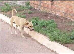 Associações não governamentais resgatam animais abandonados em Gurupi - Associações não governamentais resgatam animais abandonados em Gurupi