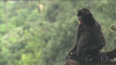 Zoológico de São Paulo terá equipe especializada em captura de animais fugitivos - Zoológico de São Paulo terá equipe especializada em captura de animais fugitivos. O parque registra de três a quatro fugas por mês.