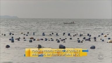 Toxina interdita cultivo de ostras e mexilhões em todo o litoral de SC - Toxina interdita cultivo de ostras e mexilhões em todo o litoral de SC