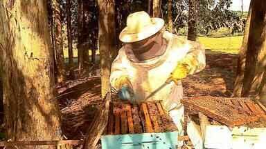 Clima prejudica produção de mel no Norte do RS - Assista ao vídeo.
