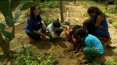 Crianças de Ouricuri transformam-se em Guardiões da Caatinga - A reportagem faz parte da série especial do GRTV.
