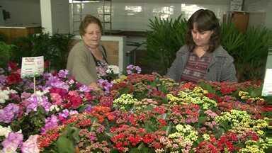 Vai até domingo mais uma edição da ExpoFlor em Cianorte - São mais de 250 espécies de plantas e flores. A exposição vai até o domingo (05) no salão paroquial da igreja matriz. A entrada é de graça.