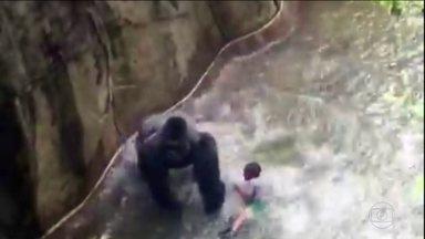 Especialista analisa as imagens da criança que caiu na jaula de um gorila - Acidente ocorreu em Cincinatti, nos EUA. Animal teve que ser morto.