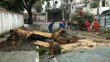 Árvore cai durante a chuva e interdita rua do Pacaembu - Uma árvore enorme está complicando o trânsito no Pacaembu, na zona oeste. Ela caiu com as fortes chuvas desta madrugada e interditou uma rua. A árvore ficou atravessada na rua Capivari, na altura do número 215. Os bombeiros estão cortando partes da árvore para conseguir retirá-la do local.