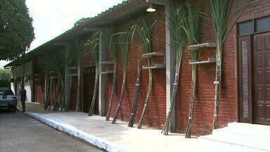 Novas variedades de cana-de-açúcar são liberadas durante solenidade - Espécies fazem parte do Programa de Melhoramento Genético.