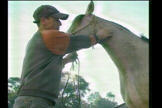 Uma doença está assustando criadores de cavalos - O mormo envolve uma polêmica.