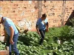 Agentes aproveitam o feriado para visitar casas em combate aos mosquitos em Araguaína - Agentes aproveitam o feriado para visitar casas em combate ao mosquito em Araguaína