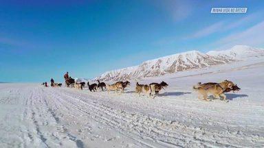 As Belezas Naturais De Svalbard