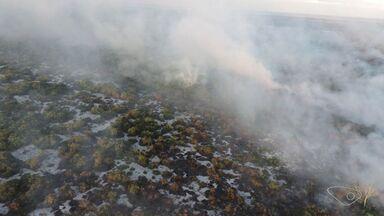 Incêndio atinge área de proteção ambiental em Vila Velha, ES - Fogo começou na segunda-feira (13) ao lado do Parque Paulo César Vinha.Corpo de Bombeiros ainda trabalha para conter as chamas.