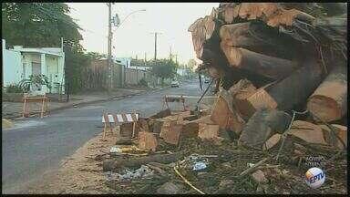 Queda de árvore provoca transtornos para moradores de Ribeirão Preto, SP - Árvore caiu no mês de maio, no bairro Ribeirânia, e têm atrapalhado moradores que passam pela Avenida Abrahão Issa Halack.