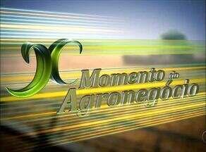 Confira o destaque do 'Momento do Agronegócio' desta terça-feira (21) - Confira o destaque do 'Momento do Agronegócio' desta terça-feira (21)