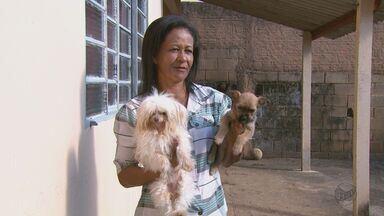 Envenenamento de animais preocupa moradores de duas cidades da região - Animais de estimação estão sendo encontrados mortos desde o ano passado em Caconde e Vargem Grande do Sul.
