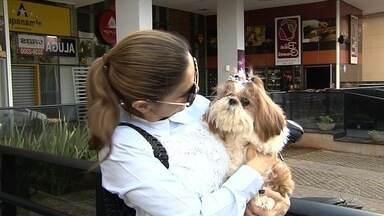 Cachorra que sumiu ao ser deixada em pet shop é encontrada, em Goiânia - A psicóloga Mônica Monteiro, dona do animal, afirma que a cachorra estava com um homem que havia a achado no Parque Flamboyant.