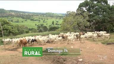 Veja os destaques do Mirante Rural deste domingo (26) - Quem traz os principais assuntos do programa é a Jéssica Melo.