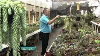 Colecionador revela os segredos para o cultivo de suculentas - As orientações são do Sergio David, que mantém uma coleção com mais de três mil espécies de suculentas. A estrela das plantas, cultivadas em estufas, é a echevéria, variedade com formas e cores diferentes.