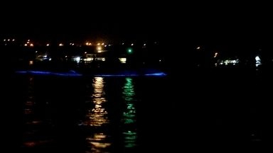 Fenômeno da natureza cria espetáculo de luz na água da Jamaica - Água cintilante só acontece em quatro lugares do mundo. Durante o dia, micro-organismos absorvem a luz do sol e, à noite, liberam energia.