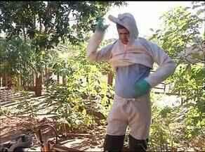 Combate ao calazar é intensificado após morte de bebê em Araguaína - Combate ao calazar é intensificado após morte de bebê em Araguaína