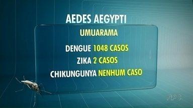 Umuarama tem hoje 1048 casos de dengue segundo último boletim da Sesa - Além da dengue, o município tem dois casos de zika.