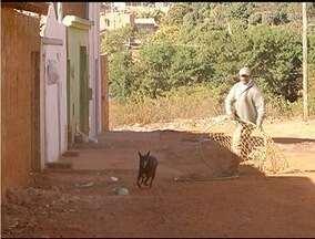 Castração de cães que vivem nas ruas é realizada em Montes Claros - Objetivo é diminuir o número de animais soltos.