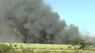 Incêndio atinge área de canavial próximo a Planalto - Uma área de canavial pegou fogo nesta quarta-feira (6) na área rural de Planaltox (SP), próximo já a área urbana da cidade. O incêndio foi tão grande que foi possível ver a fumaça preta de longe.
