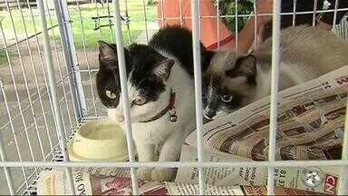 Feira em Caruaru disponibiliza 40 cães e gatos para adoção - Adoções podem ser realizadas até o dia 8 de julho, no horário das 9h às 13h.
