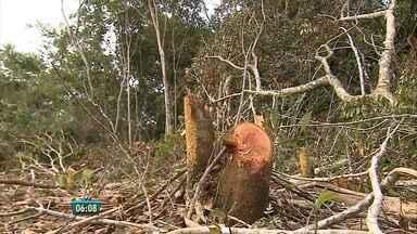 Prefeitura acusa Celpe de desmatar em parque ecológico - Árvores de mais de 20 anos do Parque João Vasconcelos Sobrinho, em Caruaru, estão sendo derrubadas.