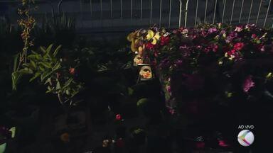 Feira de Holambra começa nesta quinta-feira em Juiz de Fora - Exposição está montada na Praça da Estação e conta com mais de 150 espécies de plantas.