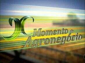 Saiba quais são os destaques do quadro Momento do Agronegócio - Saiba quais são os destaques do quadro Momento do Agronegócio