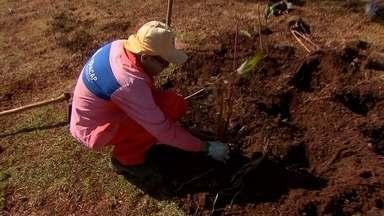 Garis e jardineiros trabalham para deixar Brasília mais bonita - Eles são responsáveis por deixar as ruas limpas e os jardins em ordem.