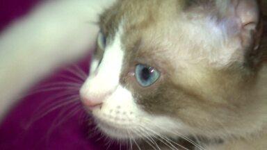 Cachorra amamenta filhote de gato - Veterinário explica essa relação e confirma 'afeto' entre os animais