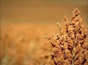 Momento do Agronegócio destaca a queda na produção de alguns produtos devido a estiagem - Momento do Agronegócio destaca a queda na produção de alguns produtos devido a estiagem