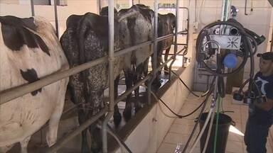 Projeto pretende aumentar em 50% a produção de leite em RO - Atualmente o estado produz 2 milhões de litros.