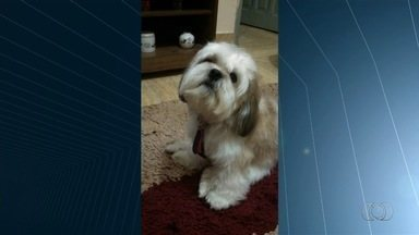 Donos procuraram por cães desaparecidos em Goiânia - Um deles é o Beny, que foi para a rua quando o portão estava aberto, no Setor Nova Vila.