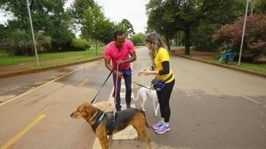 Hoje é dia de passear com o cachorro: um dia de dogwalker - Alexandre Henderson revela todas as técnicas de um passeador de cachorro profissional.