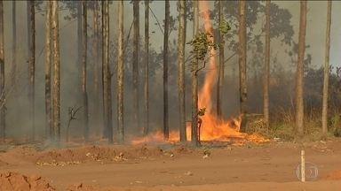 Estiagem chega mais cedo no Centro-Oeste e deflagra incêndios - As queimadas estão destruindo reservas naturais. Bombeiros tentavam, na manhã desta terça-feira (26), apagar 500 focos de incêndio no Parque Nacional do Araguaia.