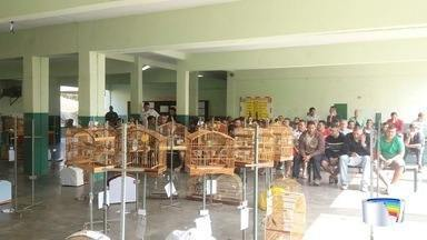 Trinta e três pessoas foram detidas em São Sebastião - Elas participavam de um torneio ilegal de canto de pássaros.