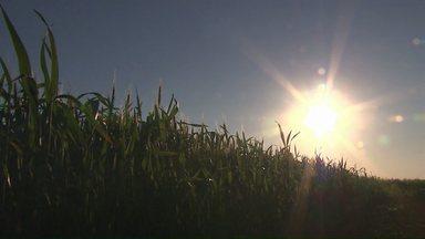 Produtores de trigo estão preocupados com a possibilidade de geada - As lavouras ainda estão em uma fase de risco e uma geada poderia prejudicar a produção.