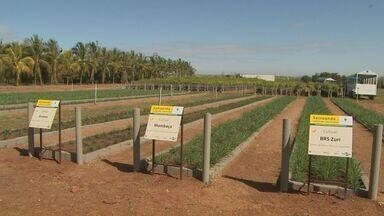 Feira em Bebedouro, SP, apresenta novidades aos produtores rurais da região - Nesse ano o desafio é descobrir como plantar mais no espaço de terra.