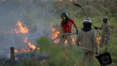 Combate a queimadas vira rotina para bombeiros em Campo Grande - Combate a queimadas vira rotina para bombeiros em Campo Grande