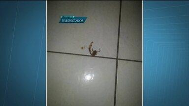 Moradora encontra escorpião em Vicente Pires - O problema é que o telefone que a Secretaria de Saúde divulgou para quem encontrou algum escorpião em casa está fora de serviço.
