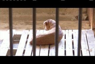 Veja como evitar a leishmaniose em cães e humanos - Somente este já foram registrados nove casos em humnanos, em Governador Valadares.