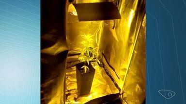 Polícia encontra plantação de maconha dentro de apartamento na Serra, no ES - Um casal foi preso e autuado por tráfico de drogas.
