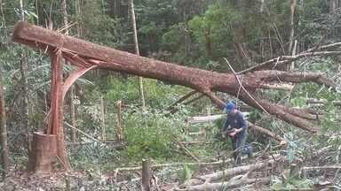 Polícia Civil combate suspeitos de desmatar área em Porto Grande - Polícia Civil combate suspeitos de desmatar área em Porto Grande