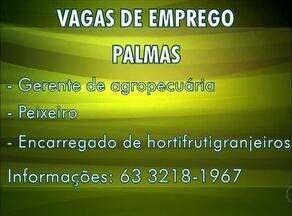 Confira as vagas de emprego do campo para Palmas, Paraíso e Araguaína - Confira as vagas de emprego do campo para Palmas, Paraíso e Araguaína