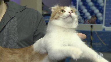 Exposição reúne gatos exóticos em Salvador - Bichanos fizeram a alegria de criadores e visitantes; confira.