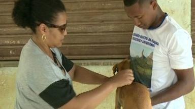 Campanha de vacinação antirrábica aconteceu neste sábado (10) no interior de Cachoeiro, ES - Um compromisso com a saúde dos cães e gatos. O telefone do Centro de Controle de Zoonoses é: 3155-5220.